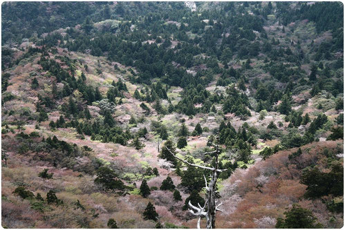 屋久島,お花見,白谷雲水峡,太鼓岩,もののけの森,もののけ姫,ガイド,ツアー,絶景,秘境