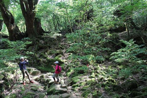 屋久島,白谷雲水峡,もののけの森,ヤクスギランド,,親子,トレッキング,ハイキング