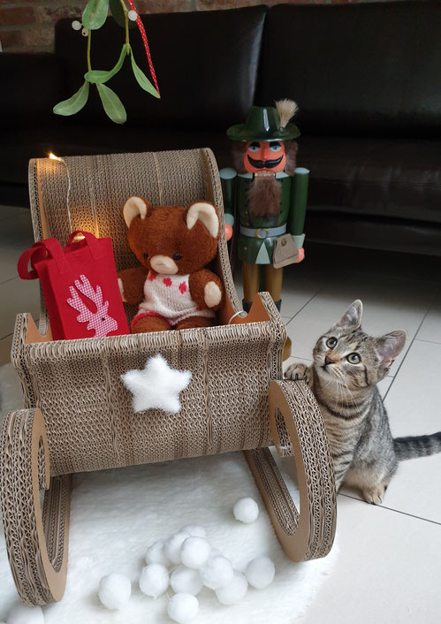 Kitten Fibi bewundert den Schlitten von Seefalke-Design