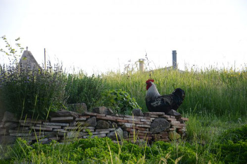 permaculture, sud gironde