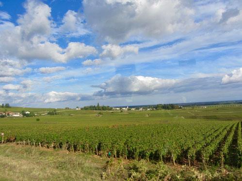 Frankreich Beaune Weinberge im Burgund