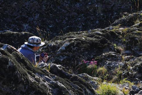 キイイトラッキョウ 険しい岩場のそこかしこに咲く。 厳しい環境のせいか、他の植物はあまりいない