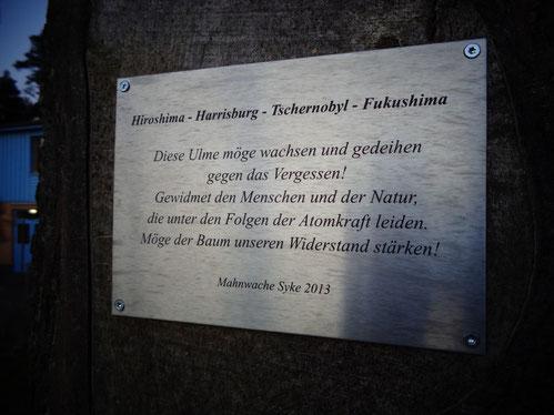 """Gedenktafel bei """"unserer"""" Ulme vor dem """"Westflügel"""""""
