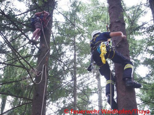 Feuerwehr; Blaulicht, FF Waidhofen/Thaya; Übung; Fallschirmspringer; Baum; Höhenrettungsgruppe;
