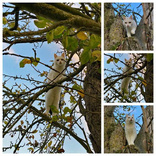 Paula im Apfelbaum