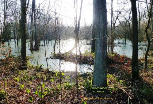 Kleines Moor im Januar, Hamburg-Volksdorf, Foto: Ilona M. Schütt, www.basenfasten-hamburg.net