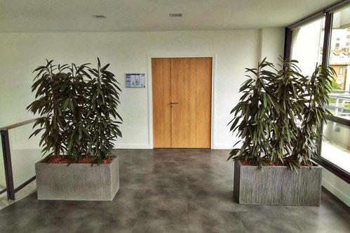 location et entretien de plantes pour ces bureaux
