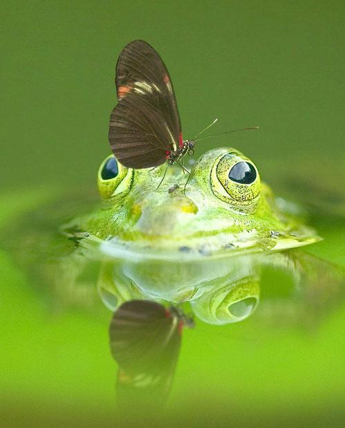 Frosch und Schmetterling befinden sich im reichen Beziehungsglück.