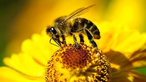 Bienenprodukte kaufen Forever
