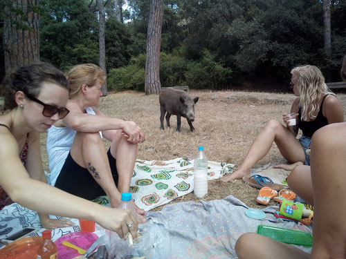 "That was my ""Saying Goodbye"" picnic in Barcelona with an unexpected visitor..."