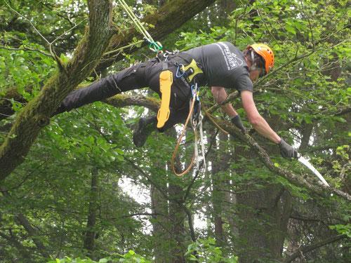 Fachgerechte Baumpflege mit professioneller Ausrüstung