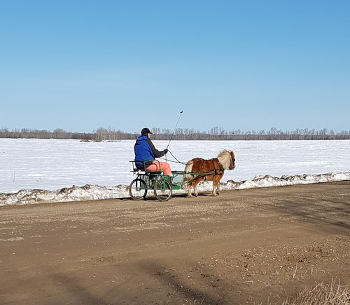 I Think this may be the photo that appeared on the Home page in the spring. I was very proud of the pony and the driver.