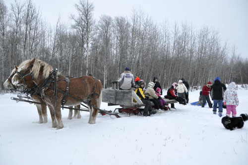 New Year sleigh ride at Millars