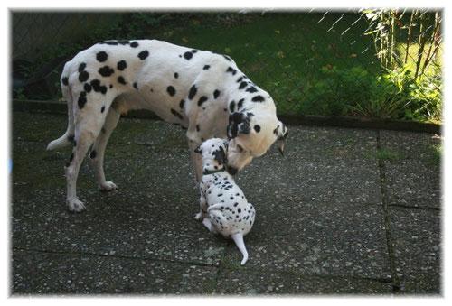 Die E-chen lieben unseren Hundeopa Arpad...!
