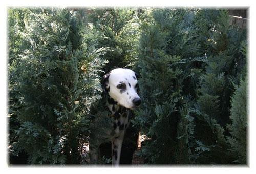 Büsche und Bäume.... Ayka's ganz große Leidenschaft