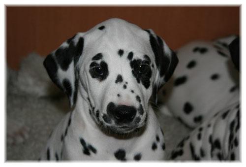 Esprit Lola.... hat sie nicht wunderschöne dunkle Augen :o))