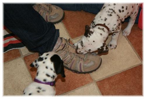 Begeistert waren alle auch von den Schuhen und den Schnürsenkeln unserer Besucher.