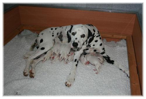 """Unsere """"kleine"""" Hundefamilie einen Tag nach der Geburt."""