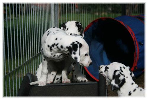Emmely (links) hat ihre Schwester Esprit Lola (rechts) ganz genau im Blick...!