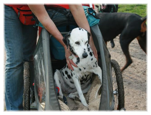 """Wenn der Weg zu anstrengend war, durfte Yosie im """"Hunde-Taxi"""" mitfahren (Mai 2009)."""