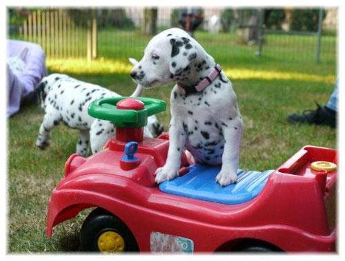 Frau Rosa übt schon für den Führerschein...!