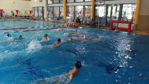 Die Schwimmsport-Gemeinschaft (SSG) Weil am Rhein hat im Laguna Badeland ein Mini-Wasserball-Turnier veranstatet, an dem vier Mannschaften teilnahmen. (Foto:TB)