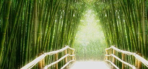 Bambusweg mit Reiki