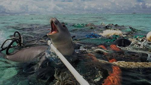 Meer Müll Robbe Verschmutzung