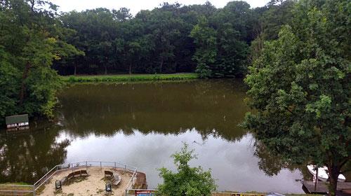 Wasserpflanzen auf dem Teich in der Weinau in Zittau wieder verschwunden