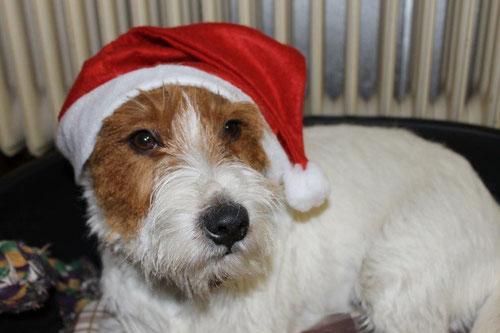 Edgar als Weihnachtsmann 2013