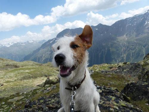 Ohr hoch! Ich höre das Echo der Berge.
