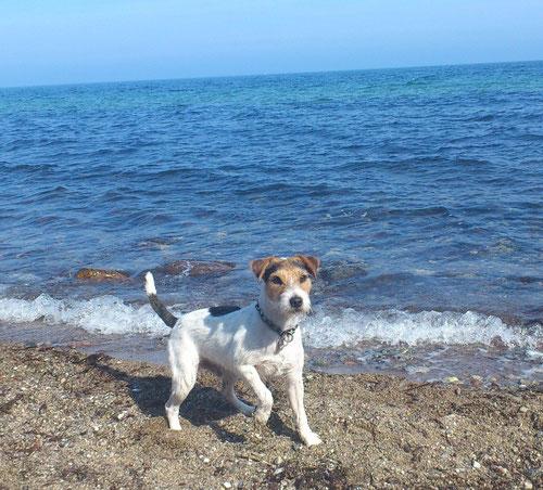 Ernie macht Urlaub an der Ostsee 2013