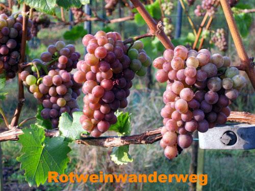 Rotwein Trauben Ahrtal