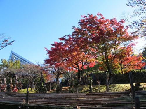 紅葉と温室と私。