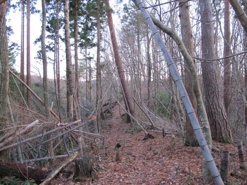 木が倒れまくっている。
