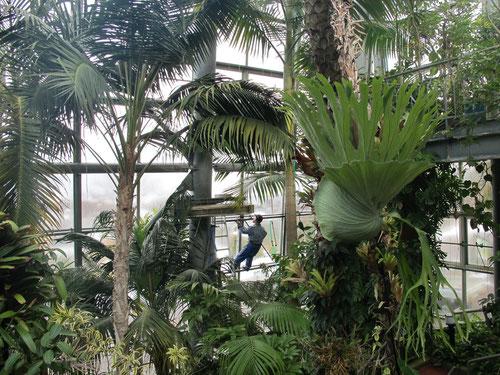 ジャングルに清掃員