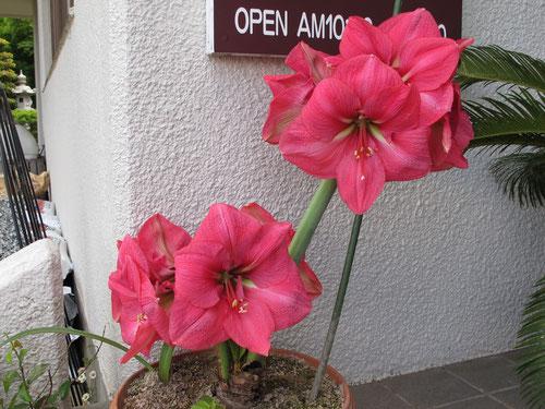 花×9です。