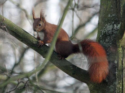 Fantasie und Wirklichkeit Fotografien und Gedichte Kathrin Steiger Eichhörnchen im Baum