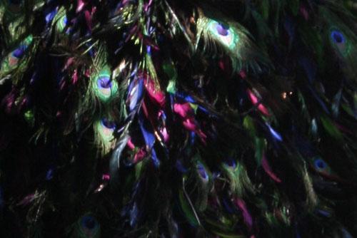 Fantasie & Wirklichkeit Fotografien und Gedichhte Kathrin Steiger Pfauenfedern