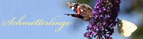 Hier klicken um zu den Schmetterlingsbildern zu gelangen