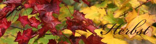 Hier klicken um zu den Herbstbildern zu gelangen
