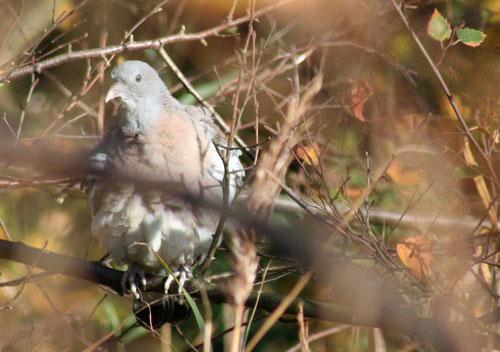 Fantasie und Wirklichkeit Fotografien und Gedichte Kathrin Steiger Taube im Baum