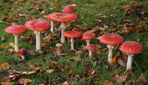 Fantasie und Wirklichkeit Fotografien und Gedichte Kathrin Steiger Pilze Fliegenpilze