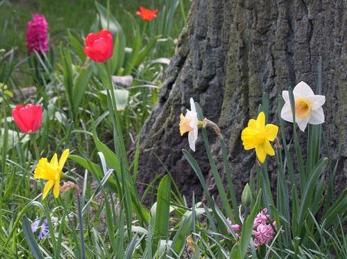 Hier klicken um zu den Frühlingsbildern zu gelangen