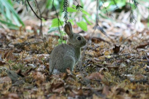 Fantasie und Wirklichkeit Fotografien und Gedichte Kathrin Steiger  Kaninchen märchenhaft niedlich Herbstblätter unter einem Baum