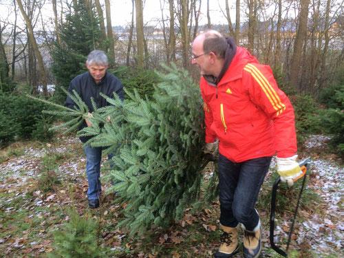 Zwei Männer, eine Säge, ein Baum. Unser Christbaum auf dem Weg nach Hause