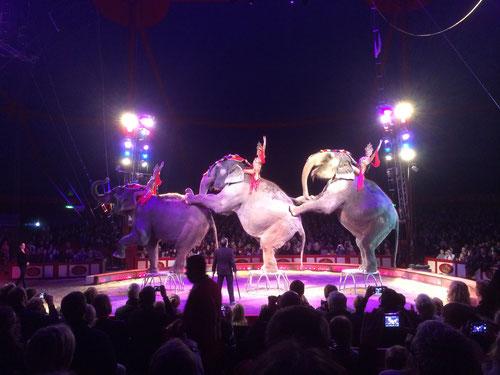 Elefantenballett. Bollywood im Zirkus Krone in Augsburg