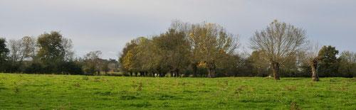 Anciens arbres tétards - Basses vallées angevines (49) - 13/11/2013