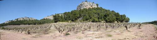 Vignoble dans le massif de la Clape (11) - Avril 2008