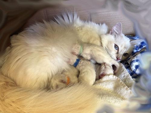 Mama Leonore mit ihren Babys